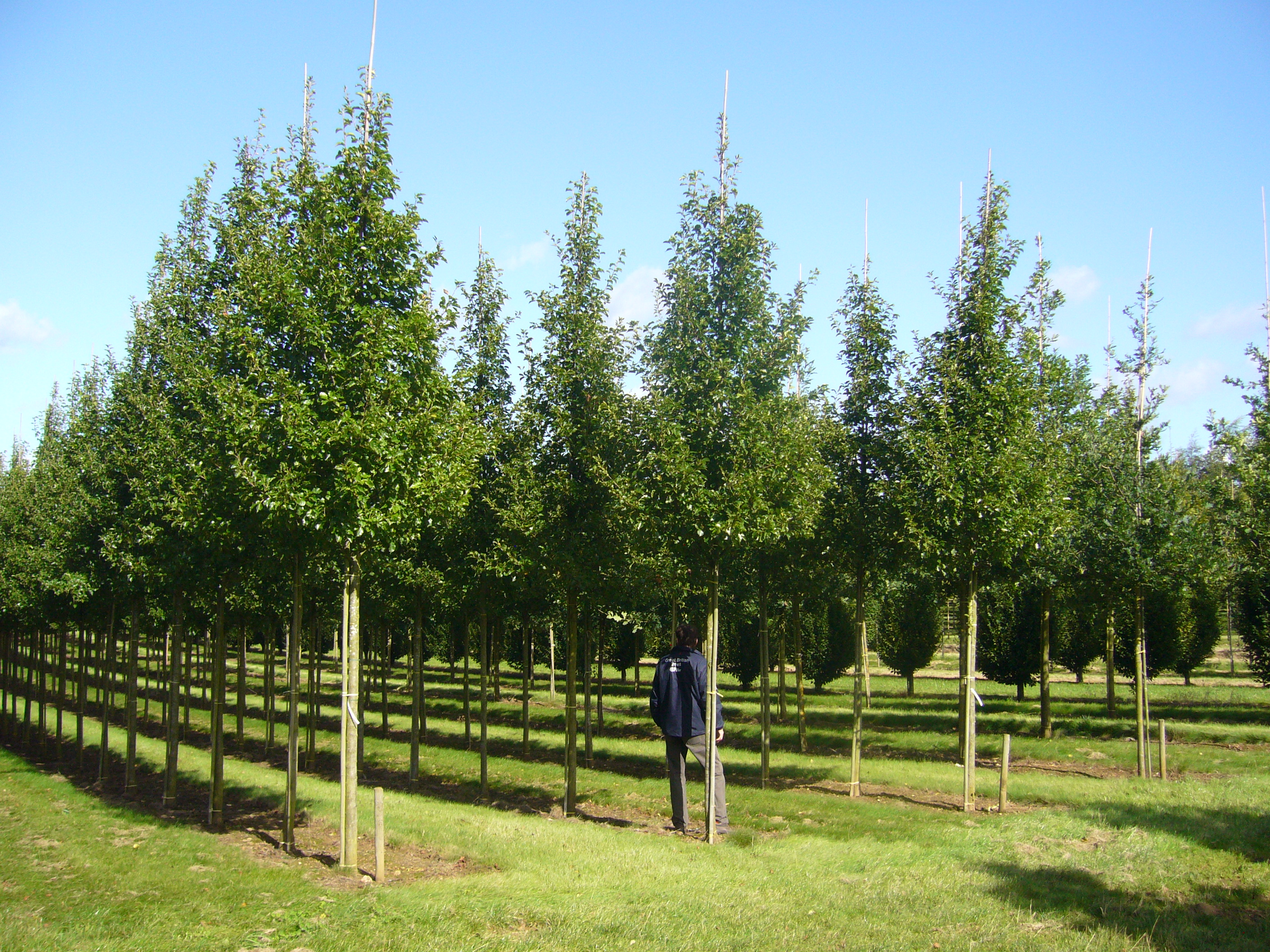 hillier manual of trees and shrubs